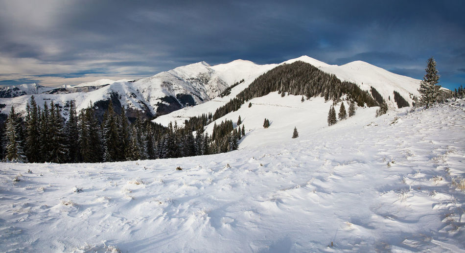 Winter landscapes from Rodnei Mountains, Romania. Cloudy Frozen Ice National Park Nature Panorama Panoramic View Tree Winter Wintertime Beauty In Nature Clouds And Sky Cold Temperature Landscape Mountain No People Outdoor Snow Snowcapped Mountain Tranquil Scene Tranquility White