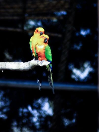 Bird Bird Photography Parrot