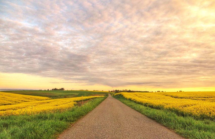 Country Road. Enjoying Nature Denmark Tadaa Community EyeEm Sunset.
