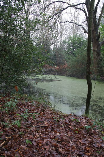 Algae Beauty In Nature Branch Day Forest Green Algae Growth Leaf Nature No People Outdoors Scenics Scum Tranquil Scene Tree Water Winter