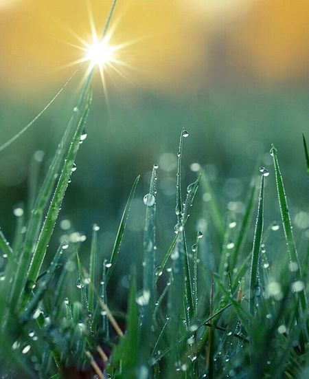Water Droplets on Grass Water Droplets On Leaves Bohkehlicious Plant Beauty In Nature Growth Drop Nature Sun Wet Sunlight Water Green Color Field Tranquility Focus On Foreground Land Sky Day Outdoors Selective Focus Lens Flare