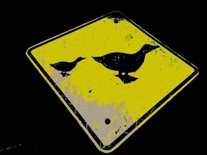 Care For Our Wildlife Ducks Ahead Signs Road Signs Signporn Two Ducks Ducks Crossing Sign Ducks Duck