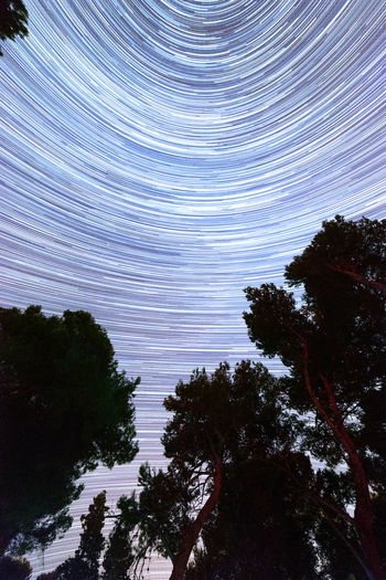 Startrails in pine forest Beauty In Nature Forest Idyllic Low Angle View Nature Night Outdoors Scenics Sky Stars Startrails Tranquility Tree
