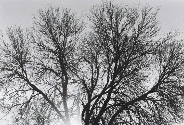 New year forms 4/4 Bare Tree Branch Low Angle View Tree Nature Outdoors Beauty In Nature Sky Tranquility No People Day Winter Clear Sky Scenics