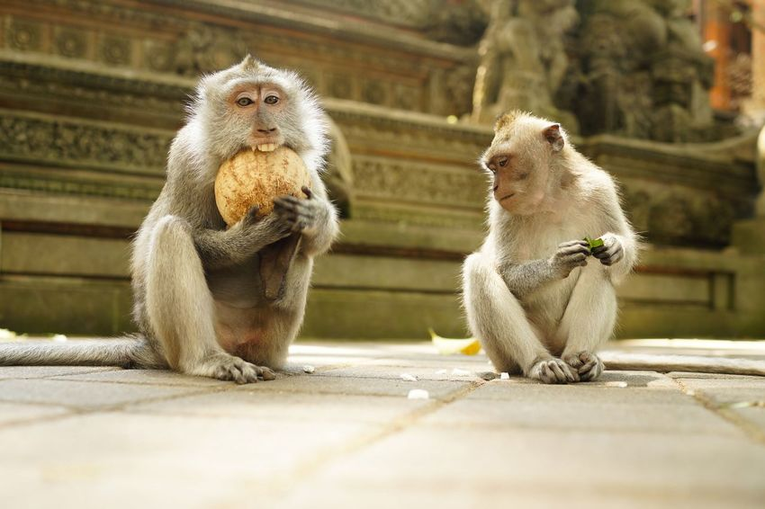 My friends. Animal Themes Animals In The Wild Close-up Day Mammal Monkey No People Outdoors Sitting Togetherness Two Animals