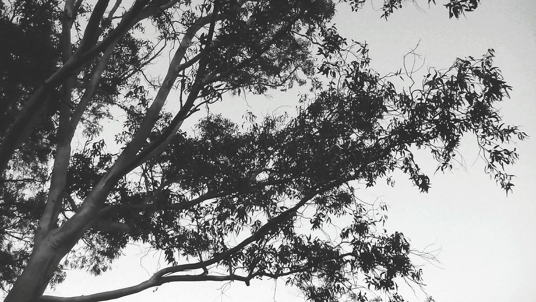 Sadness. Black & White Black And White Collection  Shades Of Grey Taking Photos Blackandwhite Photography Tree_collection
