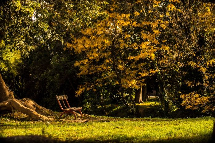 Beauty In Nature Autumn Colors Autumn Fall Beauty Fall Colors Peace And Quiet Peaceful Relax Exploring Discover Your City Sonyalpha Autumn Mood Autumn Mood