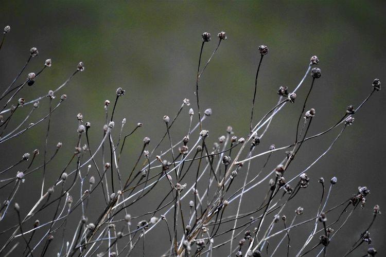 Plant Growth No