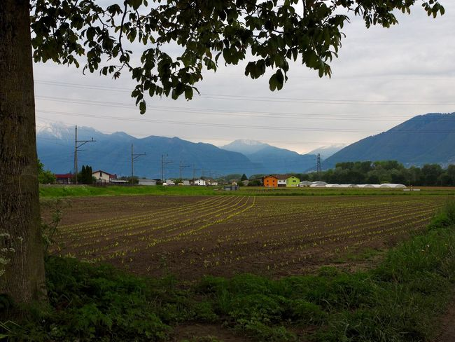 Spring fields at the foot of the alps. Piano di Magadino, Ticino, Switzerland Agriculture Beauty In Nature Day Field Growth Landscape Mountain Mountain Range Nature No People Outdoors Rural Scene Scenics Sky Tranquil Scene Tranquility Tree