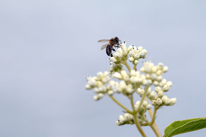 Animal Themes Animals In The Wild Beauty In Nature Bee Bumblebee Buzzing Close-up Day Flower Flower Head Fragility Freshness Growth Honey Bee Insect Nature No People One Animal Outdoors Plant Pollination