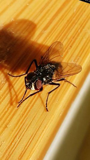 One Animal Animal Themes Animal Head  Flies Flies In Love Shadow Beetle Bettles