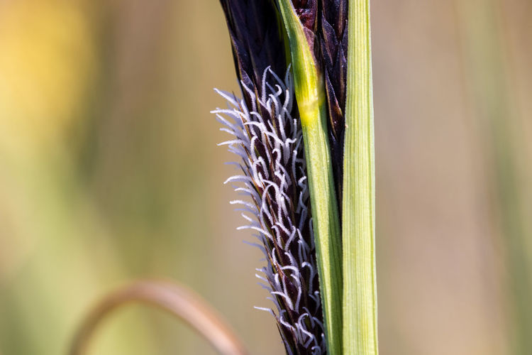 Close-up of flower growing in field