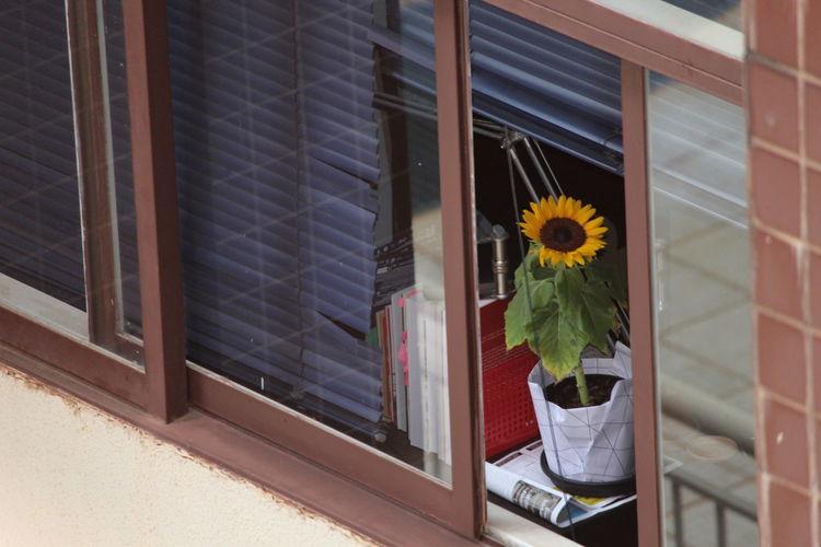 Close-up of yellow flower vase on window