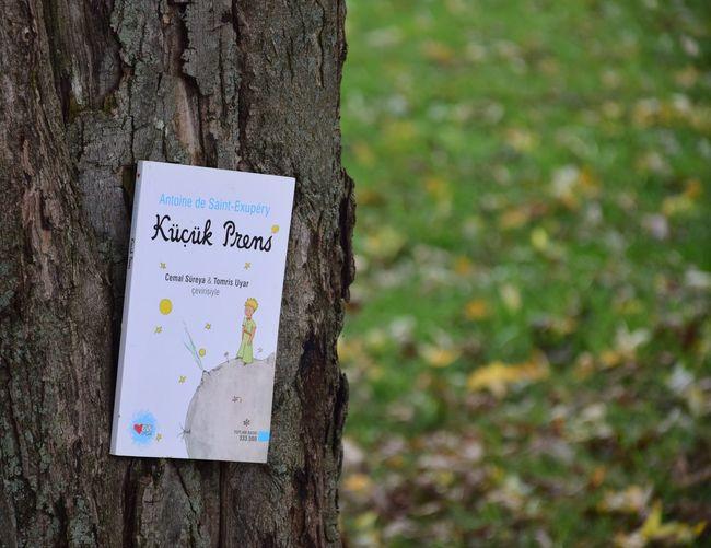 Küçük prens Bookoftheday Kitap Books Book Kucukprens Tree Trunk Trunk Communication Text Tree Plant Focus On Foreground