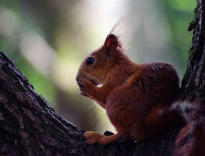 Animal Squirrel Photo Park Nature Belarus Nature Tree