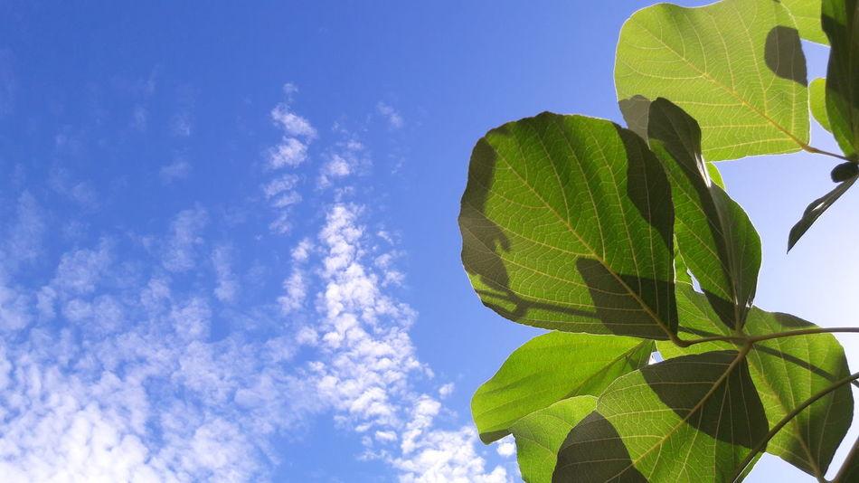 Leaves, Sky, view