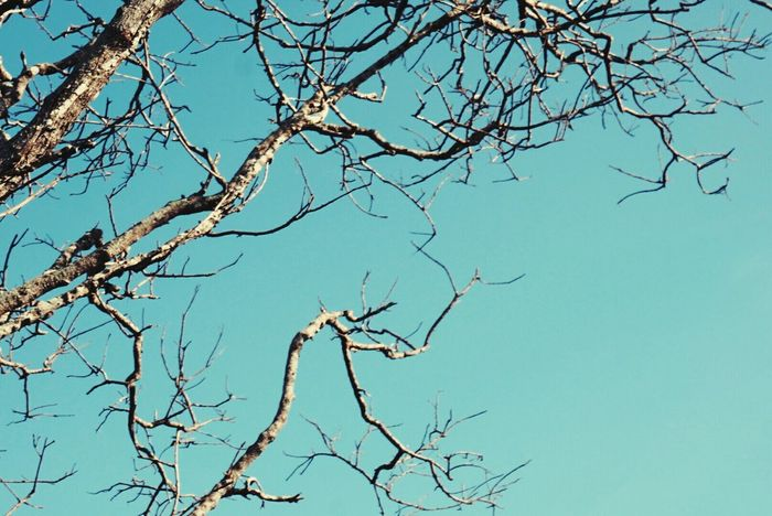 Tree And Sky Tree Art