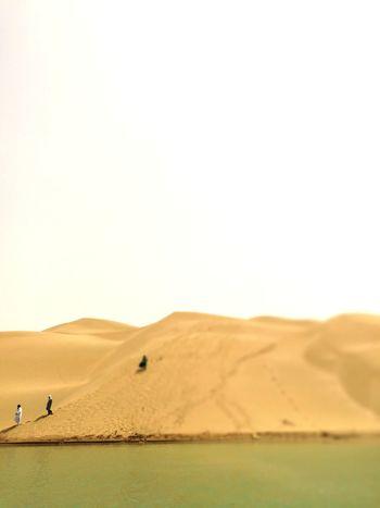 Sand Dune Desert Arid Climate Clear Sky Flamingo Hot Air Balloon Sand Heat - Temperature Bird Grazing
