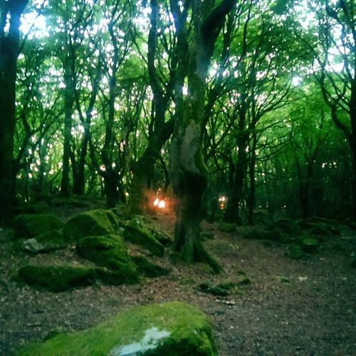Sunset Through the Trees in barna woods