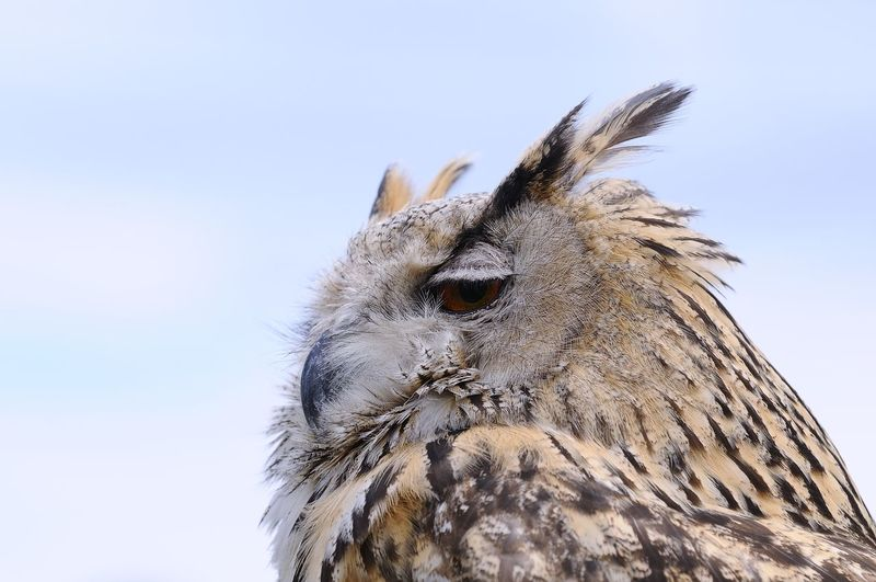 Low angle view of owl looking away against clear sky
