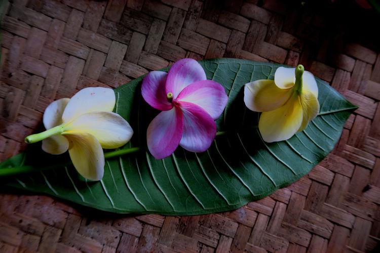Directly above shot of frangipanis on leaf