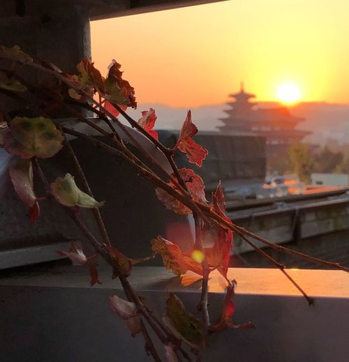 Sky Plant Sunset Nature No People Plant Part Leaf EyeEmNewHere