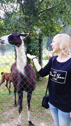 Karl  das Lama 🐴 Neuer Bester Freund 😂💚 EyeEm Nature Lover
