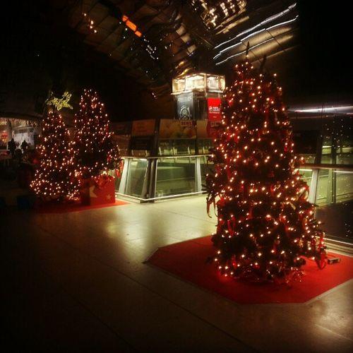Weihnachtsbäume. #Weihnachten #Fernbahnhof #FFM #Flughafen Weihnachten Ffm Flughafen Fernbahnhof