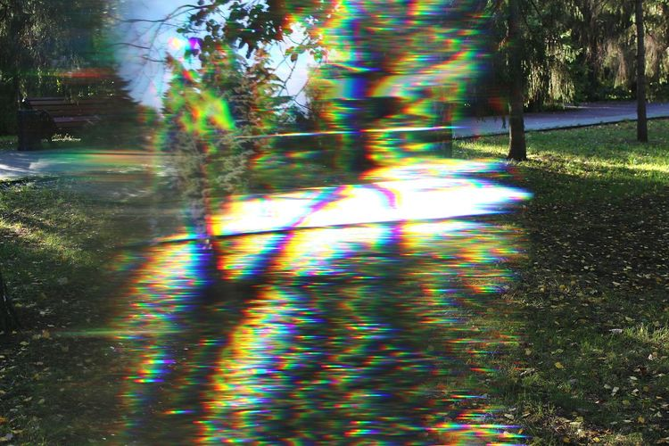 Prisma Tree Motion Illuminated Nature No People Day Beauty In Nature Outdoors Optical Illusion Spectre