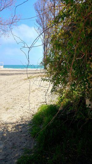 Beach Seaside