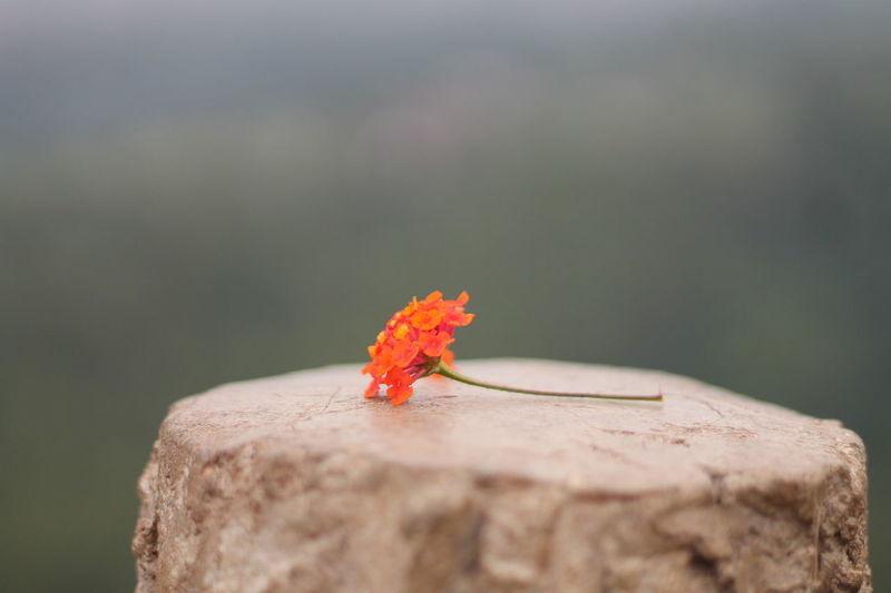 Close-Up Of Orange Flower On Rock