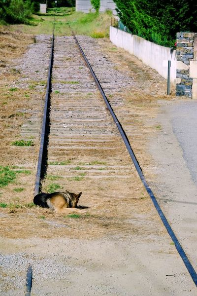 End of the line Dog Track Day Rail Transportation High Angle View Railroad Track Nature Transportation No People