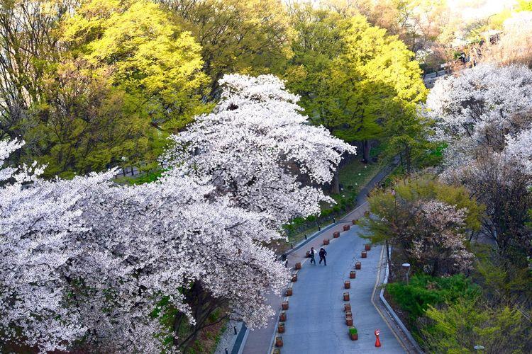 Seoul Tower,
