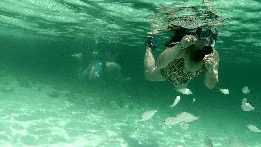 Underwater Photography Destin Beach Florida Feeding Fish Snorkeling Pinaybeauty