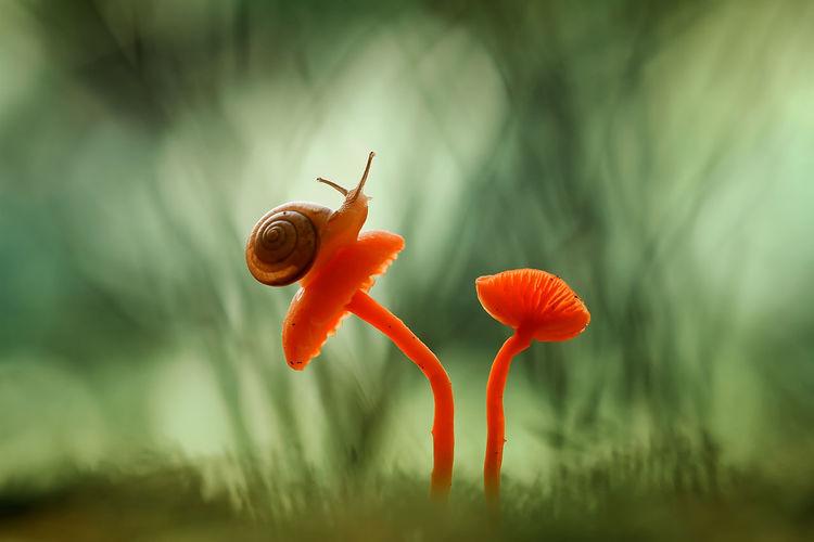 Snail Fungus