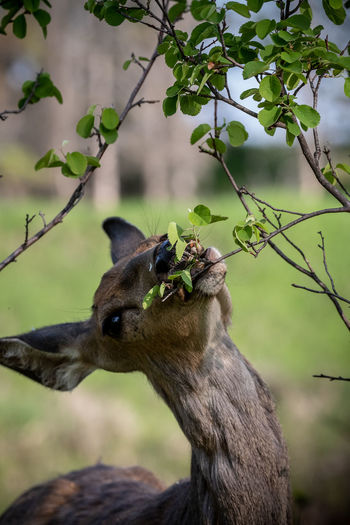 a deer in woods