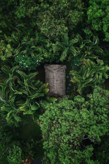 Bali Bali, Indonesia Sidemen Green Color Plant Growth High Angle View Nature No People Grass Day Outdoors Sunlight Beauty In Nature Park Garden Tranquility Plant Part