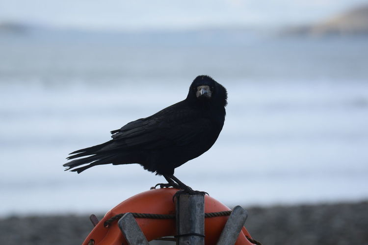 Close-up of bird perching on the sea