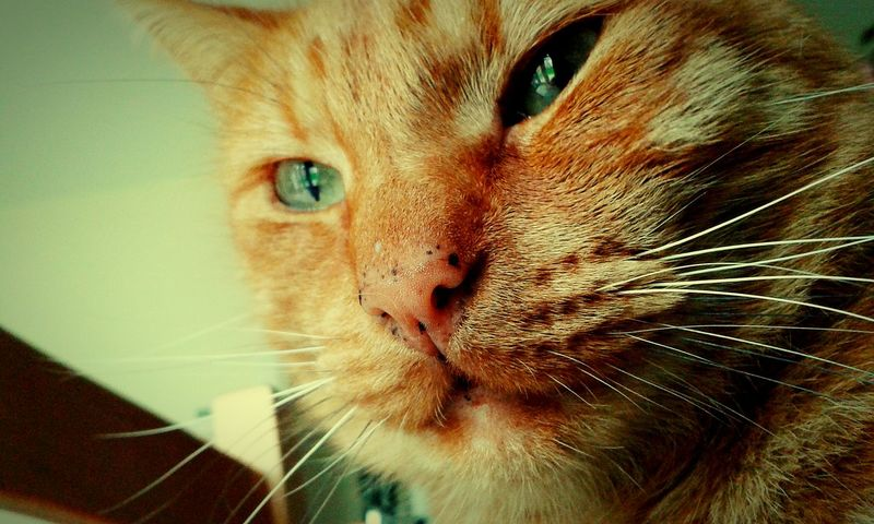 Cunning cat. Cat Cunning Smart Cat