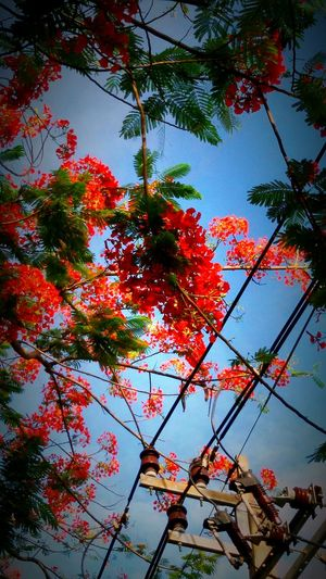 Flower, flower collection, tree, treeporn Open Edit. Eyeem Gallery Taking Photos.