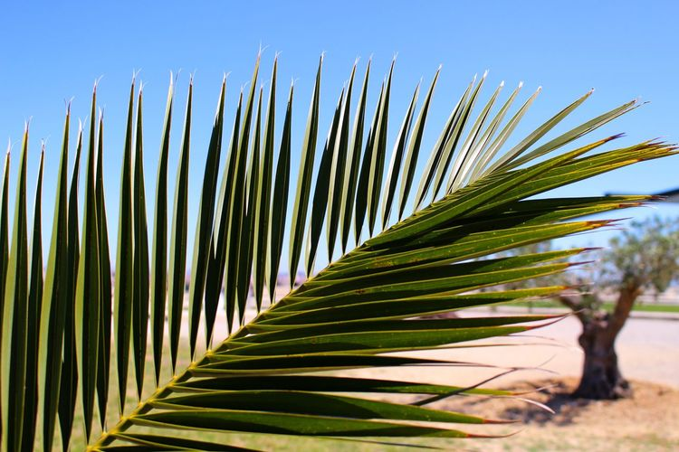Close-Up Of Palm Frond Leaves