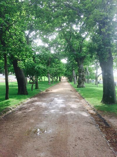 The tree lined avenue. Wine Estate Oak Trees This Where I Live Happily Buzzed