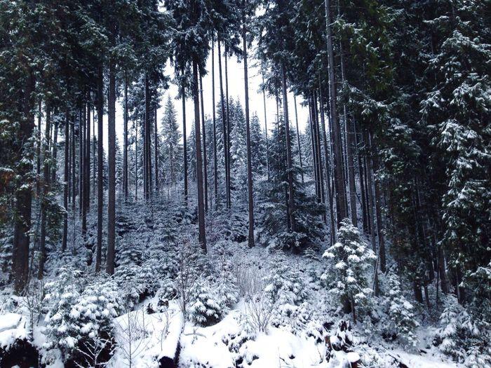 Karpaty Bukovel Winter Snow ❄ Snow Fir-tree Карпаты буковель Carpathians