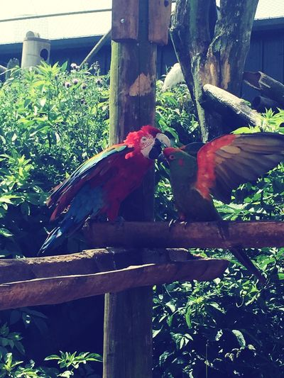 Just another day in paradise 🌴 Bird Perching Zoology Outdoors Tranquility Nature Beauty In Nature Parrots Exotic Zoo Manandwife Lovers