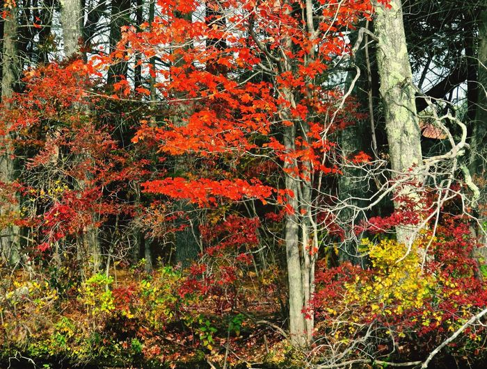 Ashland state park. New England in vivid mode, camera setting is not. Fall Beauty Fall Colors Lakeshore A Walk In The Woods A Walk In The Park Autumn In New England