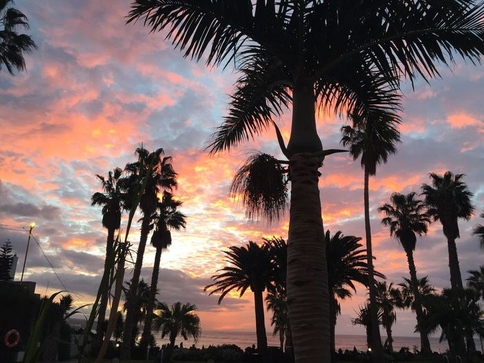 Low Angle View Of Silhouette Palm Trees Against Cloudy Sky During Sunset