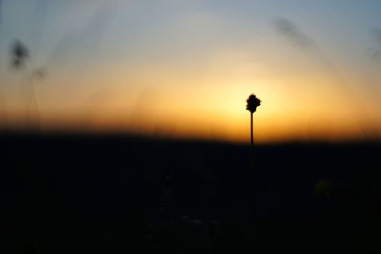 Sunset Silhouette Field Sky Grass Close-up Blooming In Bloom Stem Flower Head Fragility Plant Life