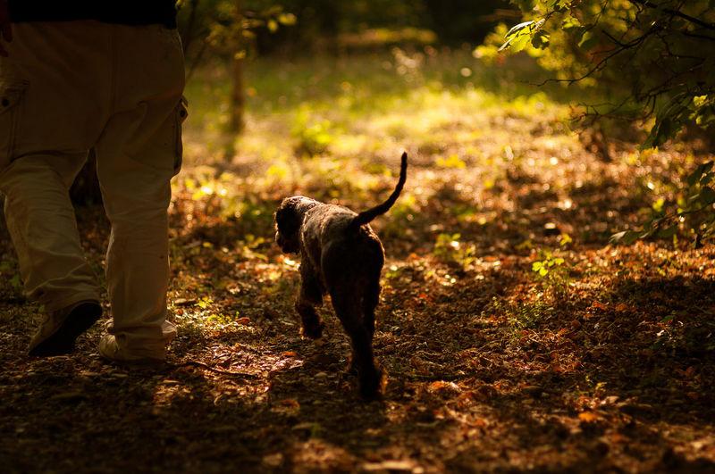 Man walking with puppy on grassland