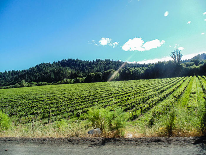 Road Winecountry Skittlezphotography Summer