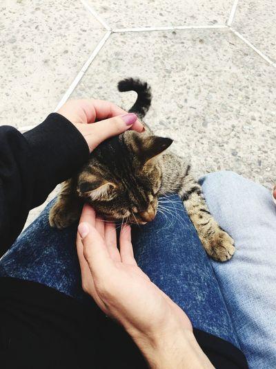First Eyeem Photo Cat Lovers Cat
